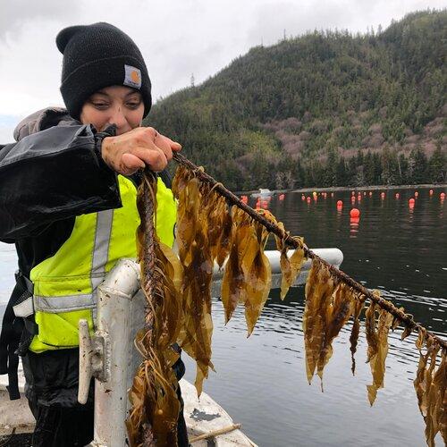 Sereia Films Kelp Farming Video
